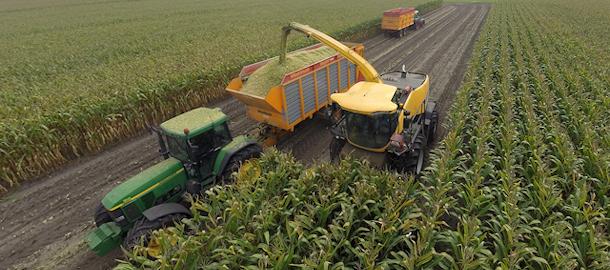 Maïs hakselen voor melkveebedrijf van der Schriek