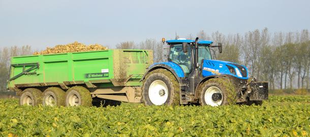 Thes Agro in de suikerbieten